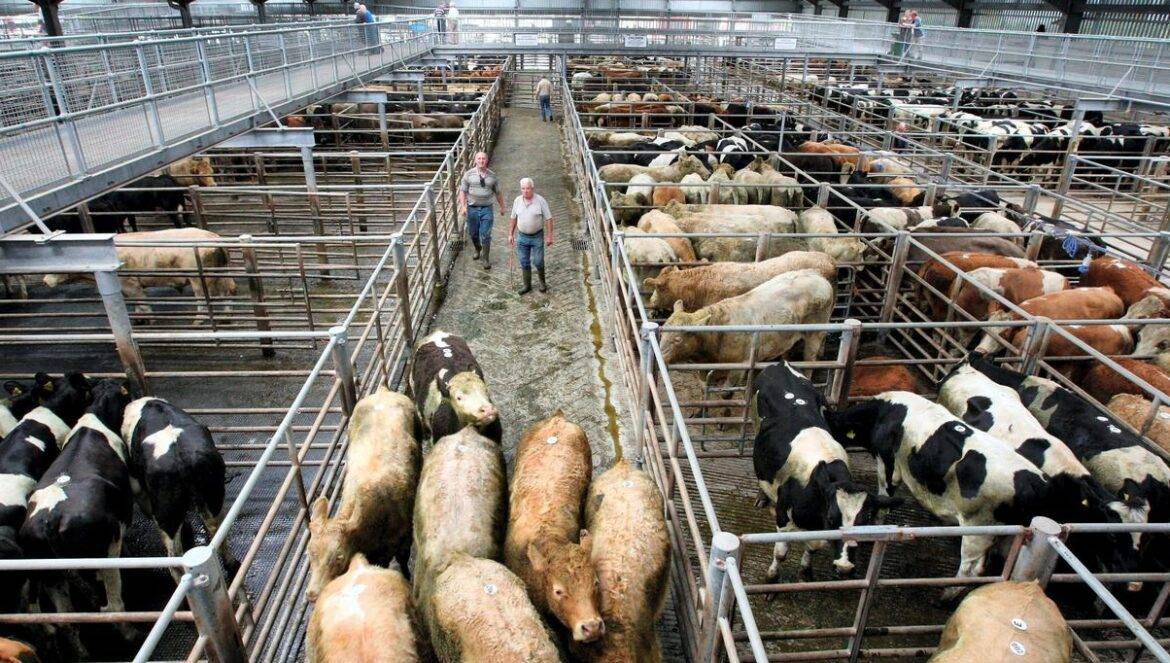 Agribusiness earnings and jobs boom despite COVID recession